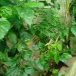14.- Casa Cozumel - Patio