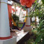14.- Casa Golondrina - Patio & garden