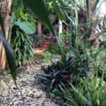33.- Casa Bonanza - Garden view 3